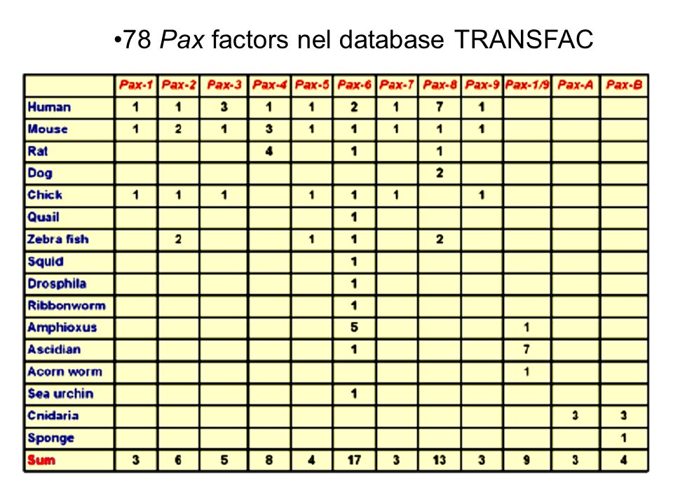 78 Pax factors nel database TRANSFAC
