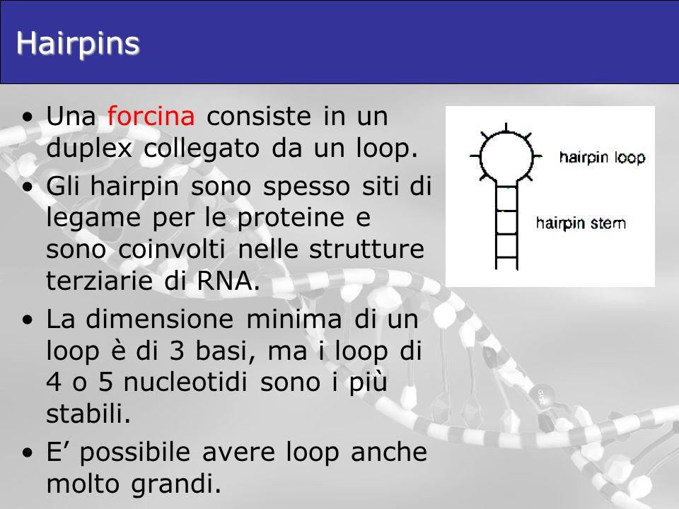 Hairpins Una forcina consiste in un duplex collegato da un loop.