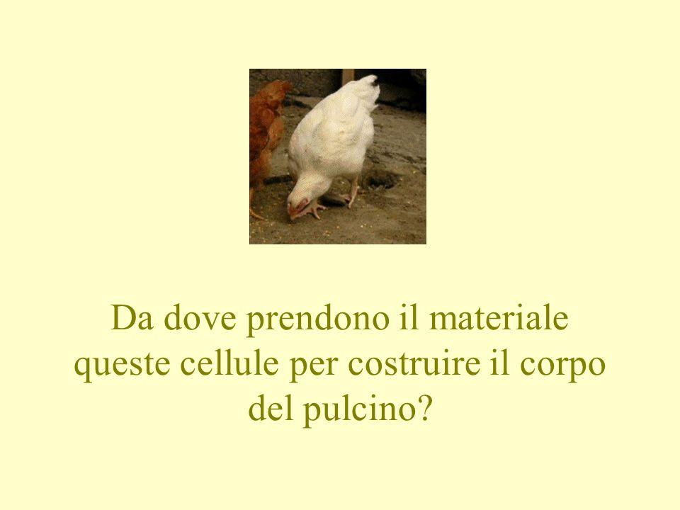 Pulcini 2007 Primi calci 2010 Piccoli amici Amatori Olmo Creazzo Calcio.