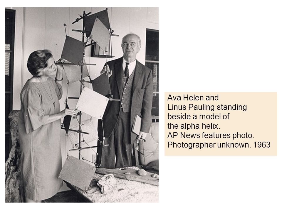 Ava Helen and Linus Pauling standing. beside a model of. the alpha helix. AP News features photo.