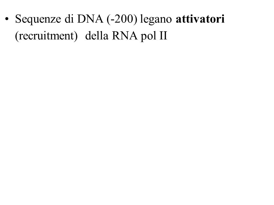 Sequenze di DNA (-200) legano attivatori (recruitment) della RNA pol II