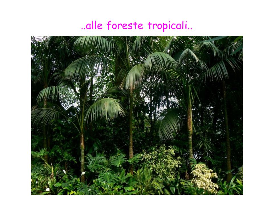 ..alle foreste tropicali..