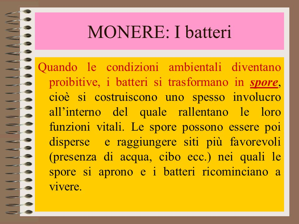 MONERE: I batteri