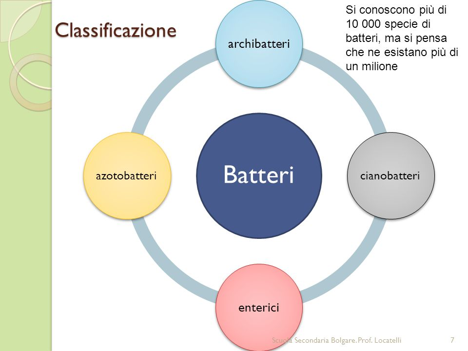 Batteri Classificazione archibatteri enterici cianobatteri