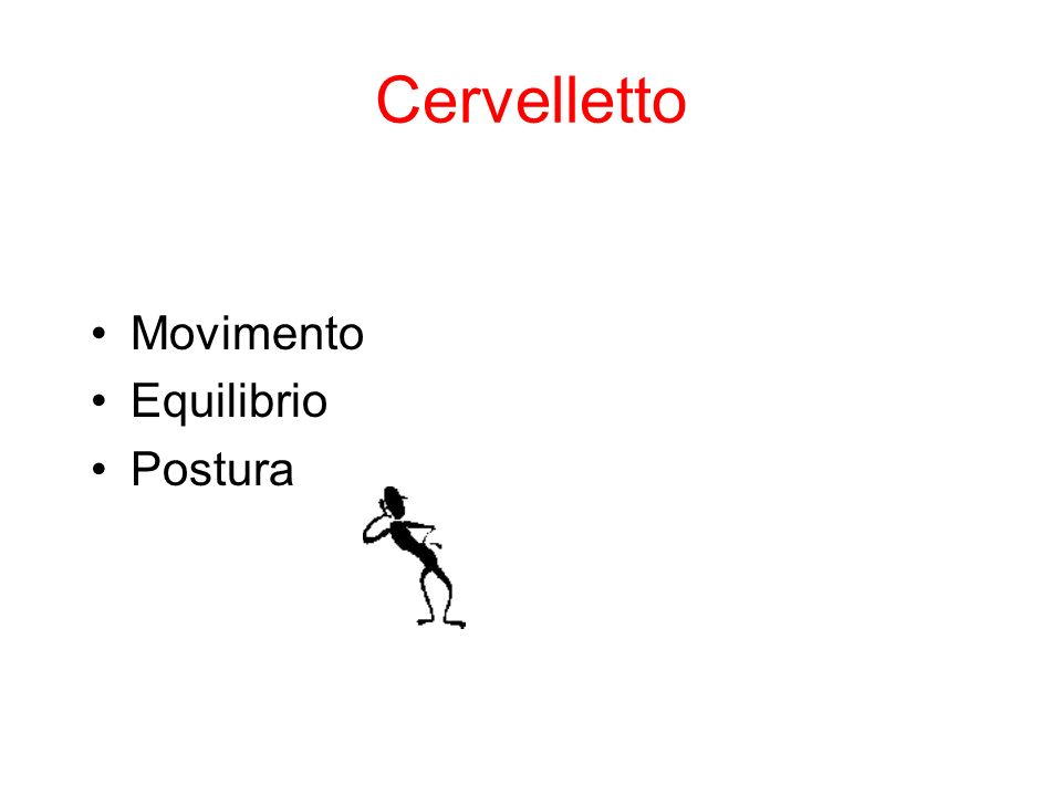Cervelletto Movimento Equilibrio Postura