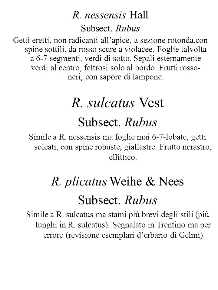 R. sulcatus Vest Subsect. Rubus R. plicatus Weihe & Nees
