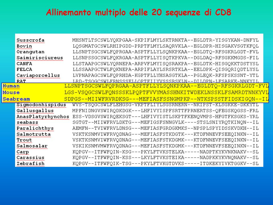 Allinemanto multiplo delle 20 sequenze di CD8