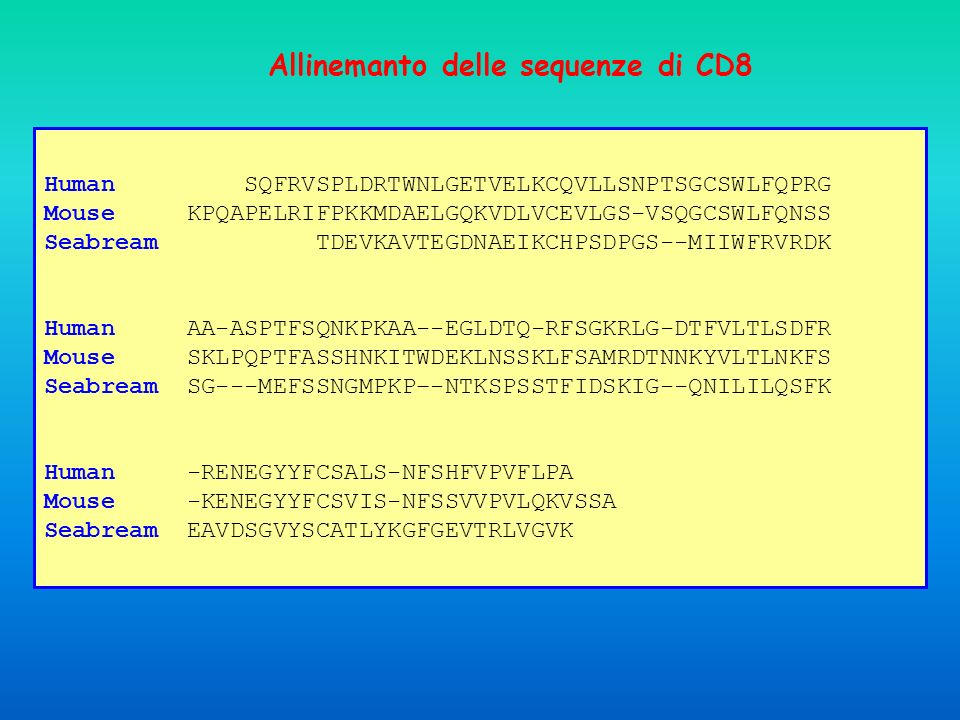 Allinemanto delle sequenze di CD8