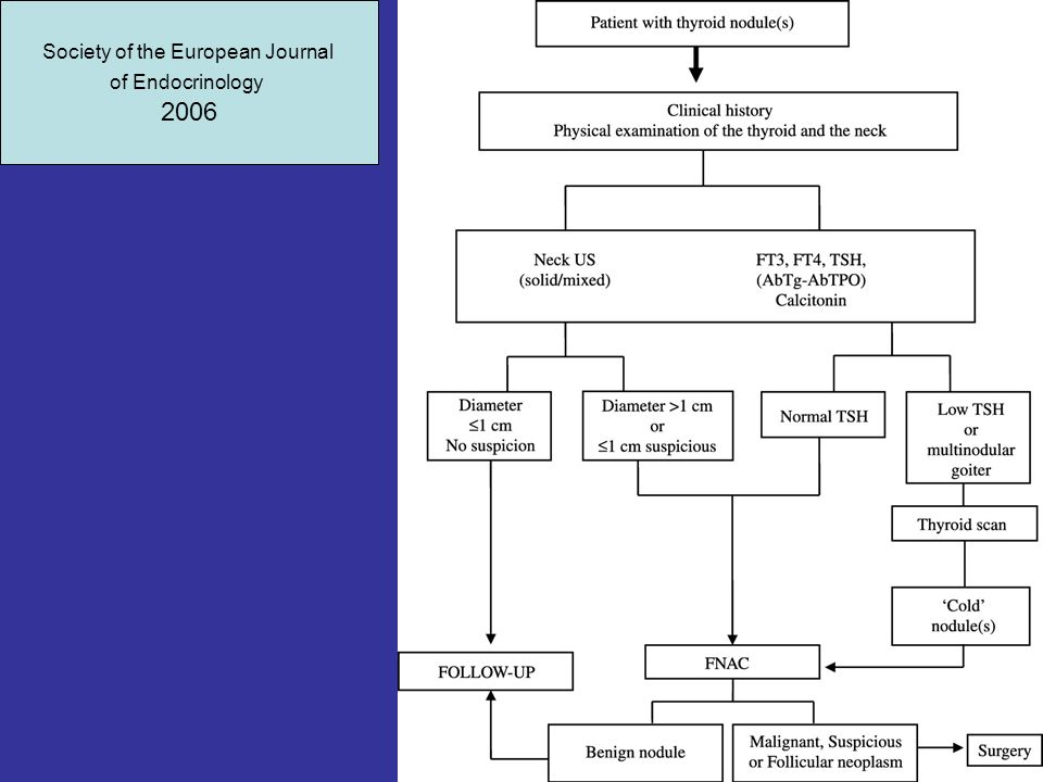 Society of the European Journal