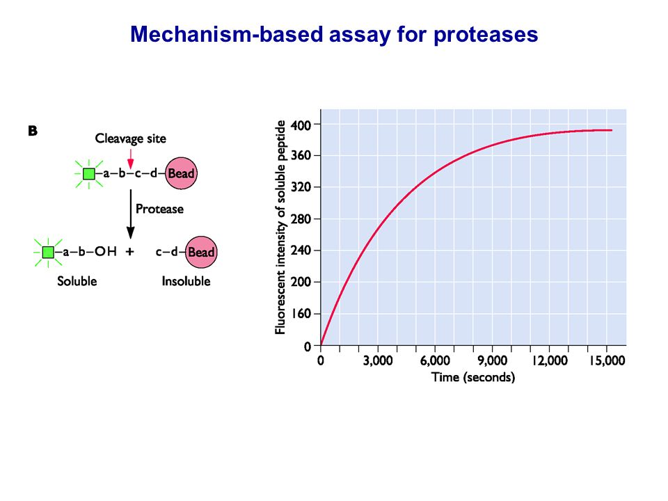 Mechanism-based assay for proteases