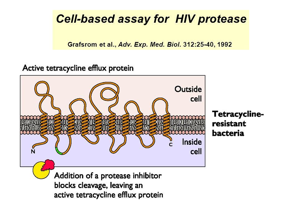 Cell-based assay for HIV protease