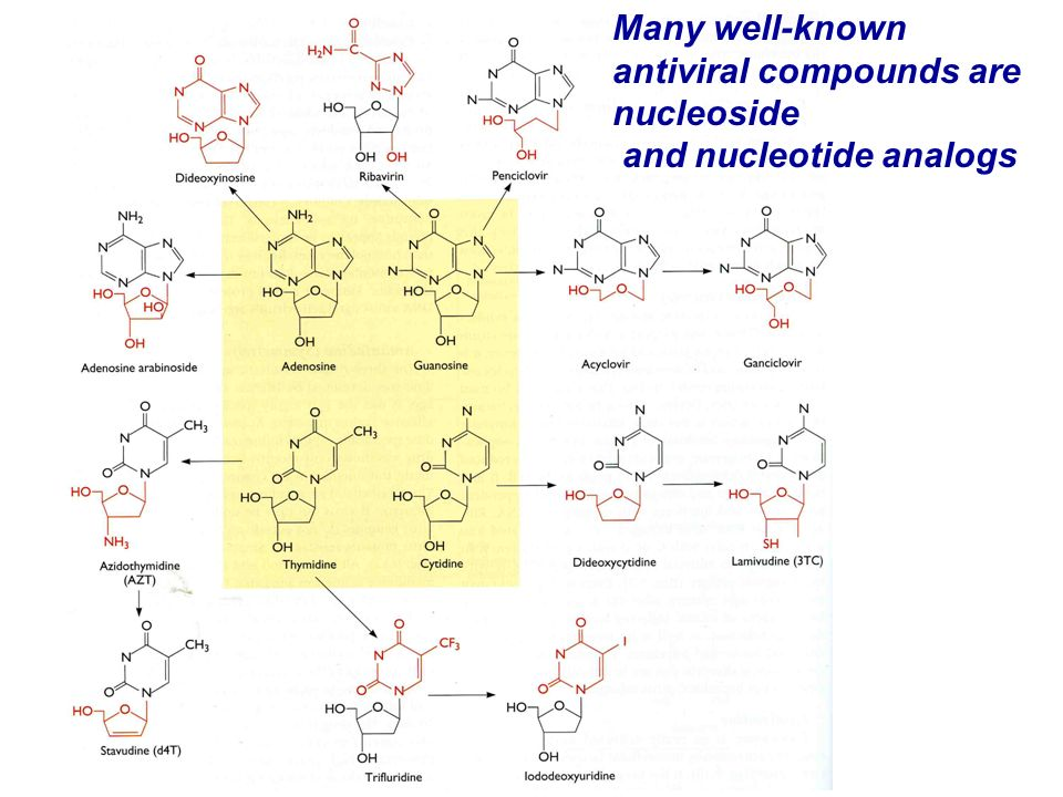 Many well-known antiviral compounds are nucleoside