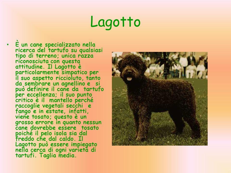 La Ricerca Del Tartufo Con Il Cane Ppt Scaricare