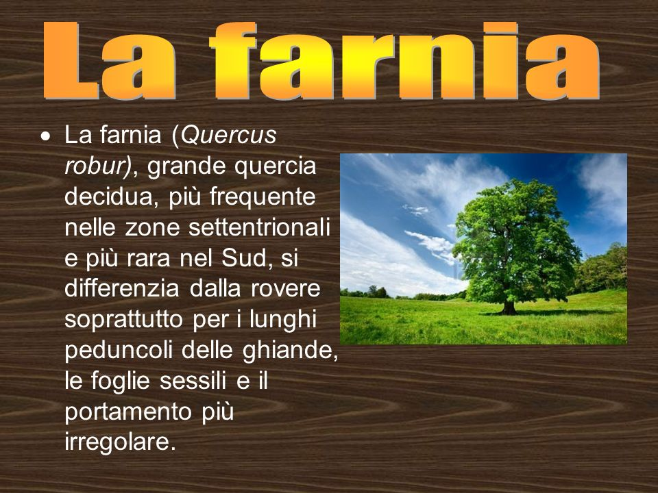 Biodiversita Quercia Quercus E Un Genere Delle Fagacee Comprende