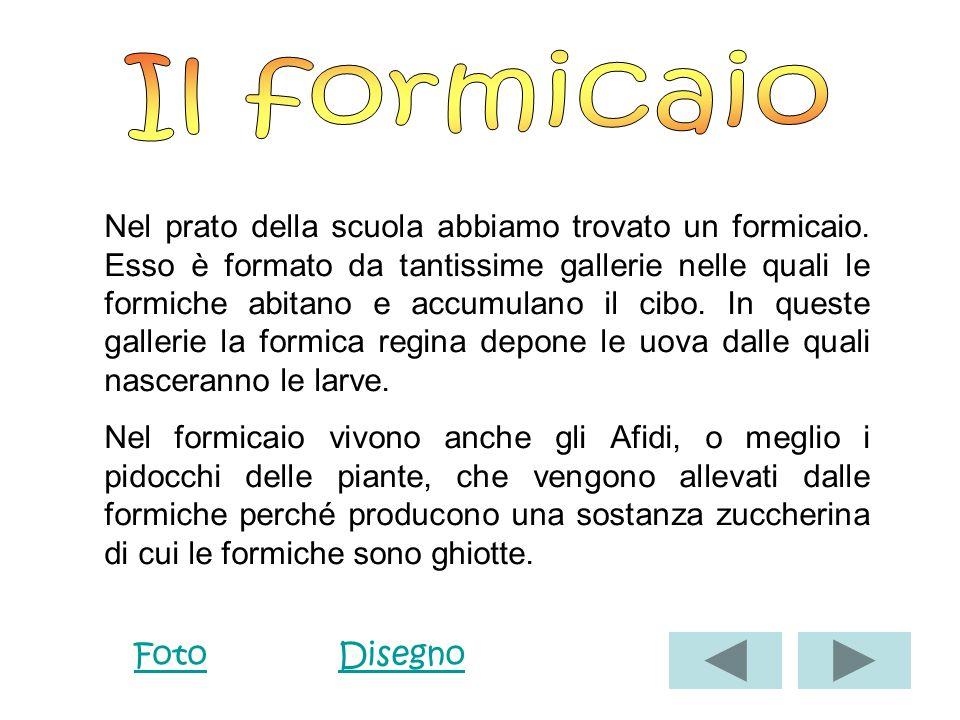 Il formicaio