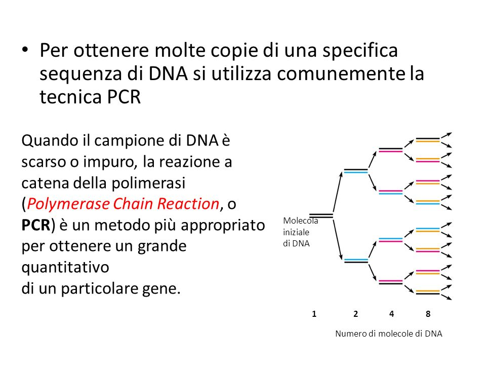 Per ottenere molte copie di una specifica sequenza di DNA si utilizza comunemente la tecnica PCR