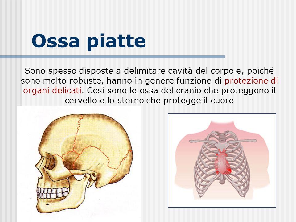 Il cervello tra le gambe 2002 full italian movie - 5 6