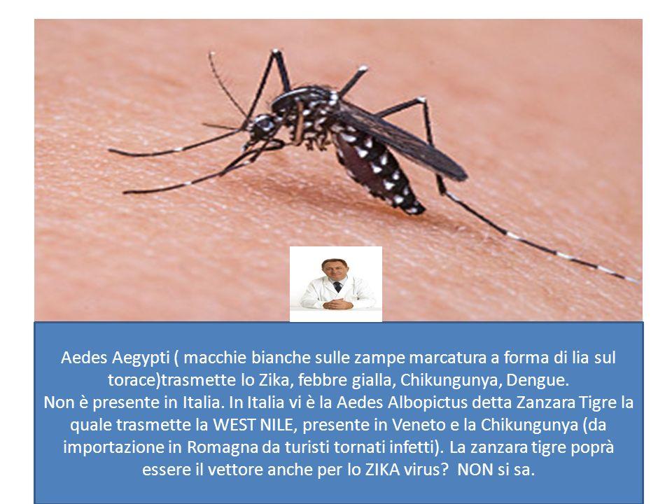 ZIKA VIRUS Prof  Enzo Raise Esperto di Malattie Tropicali