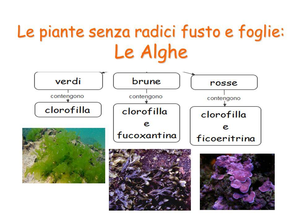 7 Le Piante Senza Radici Fusto E Foglie: Le Alghe