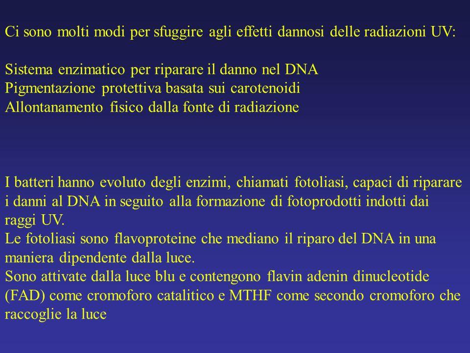 1504a0671ab4 Ci sono molti modi per sfuggire agli effetti dannosi delle radiazioni UV: